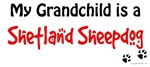 Sheltie Grandchild