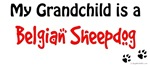 Belgian Sheepdog Grandchild