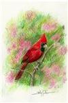 Bird Cards and Calendars