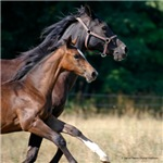 Horse-lovers Prints, Gifts and Shirts