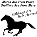 Geldings Are From Heaven. Humorous horse sayings