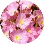 Siskiyou Pink