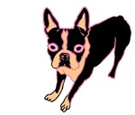 Boston Terrier (pink/blk)