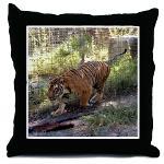Tiger Bengali