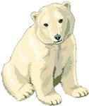 Polar Bear Shirts, Polar Bears, T Shirts, Shirt