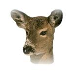 Deer, Buck T-Shirts, Gifts