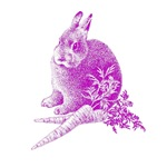 Rabbit Shirts, Rabbits, Bunny, Bunnies