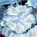 White Flower Abstract