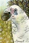 BIRDS -,CORELLA - PARROT