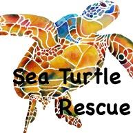 Sea Turtle Rescue 1