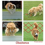 Competition Obedience