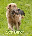 got bird
