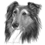 Herding/Pastoral Dogs