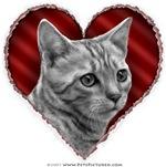 Bengal Cat Valentine