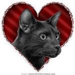 Havana Brown Cat Valentine