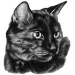 Tortoise-Shell Short-Hair Cat