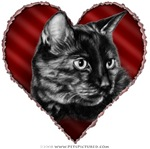 Short-Haired Tortoise Cat Valentine