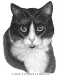 Kitty G., Black & White Cat