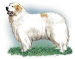 Pyrenean Mountaindog