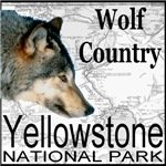 Wolf Country Yellowstone National Park