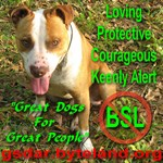 No BSL (Breed Specific Legislation)
