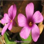 Passionate Wildflowers
