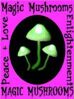 Magic Mushrooms Enlightenment