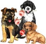 Valentine Dog Rose