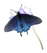 Flower Tees