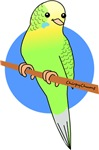 Budgie Series