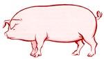 Pissed Off Pig