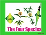 The Four Species Sukkot
