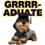 Graduation Wirehaired Dachshund