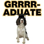 Graduation English Springer Spaniel