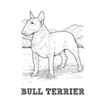 Bull Terrier Illustration