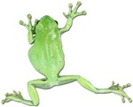 Tree Frog Photo Gifts