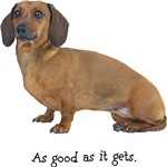 Good Dachshund