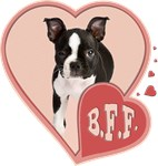 BFF Boston Terrier