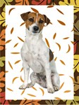 Autumn Jack Russell Terrier