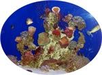 Aquarium, Fish Tank, Fish