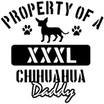 Chihuahua Daddy