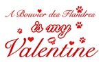 A Bouvier Des Flandres is my valentines