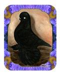 Muffed Tumbler Pigeon Framed