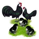 Rosecomb Black Bantam Family