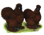 Red Silkie Chickens