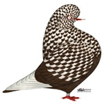 Brown Teager Pigeon