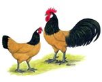 Gold Lakenvelder Chickens
