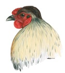 Mapuche Rooster