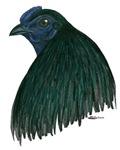 Sumatra Rooster Head