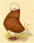 Red Baldhead Tumbler